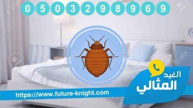 Photo of شركة مكافحة حشرات بالجبيل 0503298969 (شركة الغيد المثالي ) في القضاء علي الحشرات