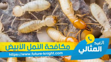 Photo of شركة مكافحة النمل الابيض بالدمام 0503298969 الغيد المثالي