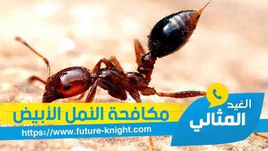 Photo of شركة مكافحة النمل الأبيض بالقطيف 0503298969 الغيد المثالي