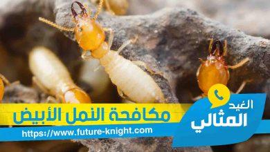 Photo of شركة مكافحة النمل الأبيض بالخبر 0503298969  الغيد المثالي