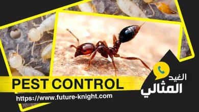 Photo of شركة رش حشرات بالدمام  0503298969 الغيد المثالي