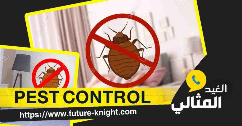 شركة رش حشرات بالدمام